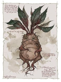 Harry Potter Mandrake - Pigmented ink fineliner, watercolor and a bit of Photoshop Hogwarts, Mythological Creatures, Mythical Creatures, Harry Potter Mandrake, Theme Harry Potter, Harry Potter Plants, Arte Sketchbook, Harry Potter Drawings, Fantastic Beasts