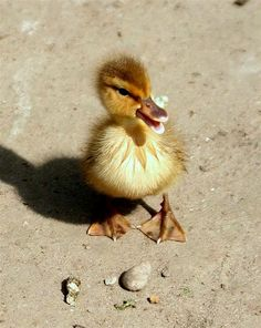 This looks like the sassiest duck alive, and therefor it could easily be my spirit animal.