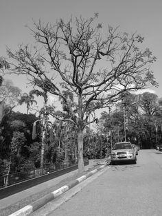 Contraste de Tema- Luiza, 8B. Eu gostei muito dessa foto. Particularmente, fotografias de árvores chamam muito muito minha atenção, e por conta disso apreciei muito poder tirar uma também. Mas o que mais gostei é que o modo como a luz estava, trouxe uma marcação intensa da árvore e seus contornos. A planta pode, exatamente como eu queria, ficar em grandessíssimo destaque.
