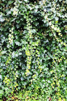 Ramas (líneas) y hojas (planos).