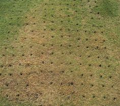 What is so important about lawn aeration? Stronger roots and healthier turf is the answer! Lawn Care, Garden Tools, Lawns, Outdoor Decor, Roots, Environment, Yard, Gardening, Patio