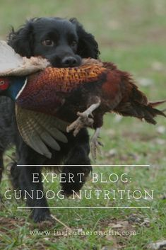 Expert Blog: Gundog Nutrition Interesting Information, Country Life, Fun Facts, Bob, Nutrition, Animals, Pet Dogs, Wtf Fun Facts, Animais