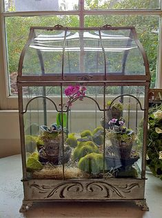 Terrarium for African Violets (in company with orchid)