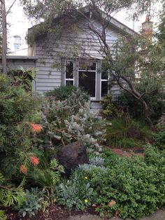 Picture Sundays: What the Backyard Looks Like this Spring Small Front Gardens, Back Gardens, Outdoor Gardens, Small Front Garden Ideas Australia, Australian Garden Design, Australian Native Garden, Bush Garden, Dry Garden, Drought Tolerant Garden