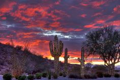 Saguaro Christmas Sunset by paulgillphoto, via Flickr