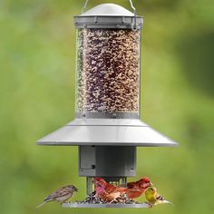 Automatic Bird Feeder | National Geographic Store
