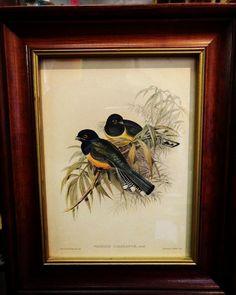 Framed Vintage Bird Print $12.50 #mercantile_m #andersonville
