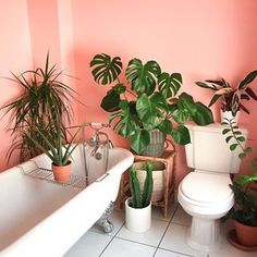 Working hard to gain my indoor jungle status 🤣 . . . . . . . . #urbanjungle #urbanjunglebloggers #houseplants #houseplantclub #jungalowstyle #plantsonpink #plantporn #plants #plantlady #plantlove