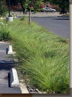 PARKING LOT STORMWATER SWALES - drains drainage water management