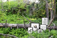 Posters in the scandinavian forest. Posters from Anna Grundberg, Sofie Rolfsdotter, Majali and Tovelisa. Nordic Design, Scandinavian Design, Archipelago, Photo Shoots, Poster Wall, Sweden, Cool Pictures, Anna, Gallery Wall