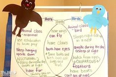 Bat lesson plans for kindergarten is here! Math, Poetry, Center Activities, and craft ideas. See how I craft lessons around the book, Stellaluna! Science Lesson Plans, Kindergarten Lesson Plans, Kindergarten Activities, Book Activities, Preschool Curriculum, Stellaluna, Poetry Center, The Book, Craft Ideas