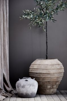 Potted Large Olive Tree measuring tall and making a stunning statement piece. Indoor Olive Tree, Potted Olive Tree, Faux Olive Tree, Potted Trees, Olive Jar, Indoor Plant Pots, Large Plants, Garden Trees, Tree Designs