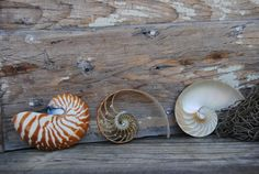 Beach Decor  3 Section Nautilus set 5   Wholesale by BeyondtheSeas, $30.50