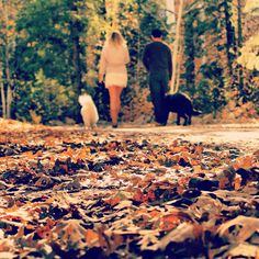 Fall engagement photos holding hands instead of leashes