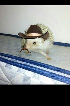 Spiny cowboy!