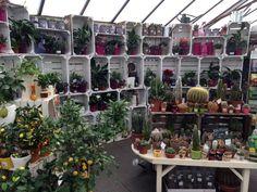 The Garden Centre Blog - Fantastic Houseplants - Ferndale Garden Centre 1