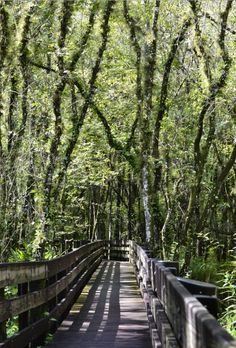 Six Mile Cypress Slough Preserve in Fort Myers, FL. Great place to take a walk.