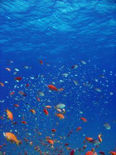 Fish in the sea.