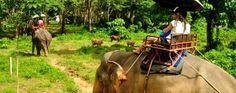 شركة سيف للسفر و السياحة - نصف يوم : ركوب الأفيال و معبد كهف النمر