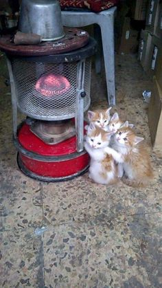 four adorable kittens getting warm