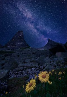 Galaxy and flowers, Ergaki National Park, Russia