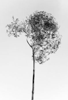 i was shot by Billy Kidd. - Something found was shot by Billy Kidd. Botanical Drawings, Botanical Illustration, Illustration Art, Illustrations, Zentangle, Billy Kidd, Growth And Decay, Natural Forms, Fine Art Photo