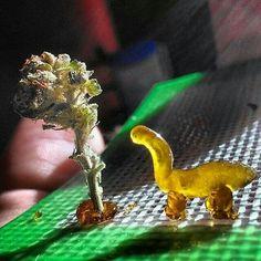 Dino dabs.