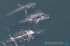 Iceland Killed 134 Endangered Fin Whales This Whaling Season