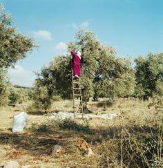 Alessandra Sanguinetti palestine