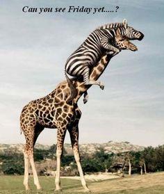 Somewhere in Nairobi National Park