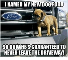 Proud Ford owner? Check out these really hilarious Ford memes that'll make you laugh with so much pride. Gmc Trucks, Ford Pickup Trucks, Diesel Trucks, Cool Trucks, Dodge Diesel, Pickup Camper, Dodge Cummins, Truck Drivers, Jeep Pickup