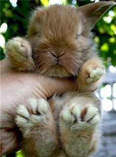 a baby bunnie that sleeping in someones hand how cut is that