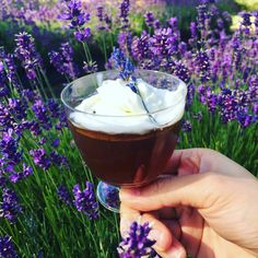 Lavender Tea Jelly. One layer of lavender syrup with whipped cream. ❤️ www.lavenderbackyard.co.nz #lavender #lavenderfarm #newzealand #hamiltonnz #nz #pyo #schoolholiday #kids