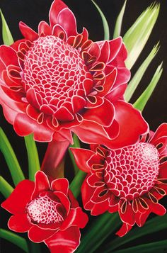 ~~Torch Ginger by Anna Keay~~ ~Beauty of Flowers & Gardens - Beautiful Flowers Unusual Flowers, Rare Flowers, Amazing Flowers, Beautiful Flowers, Orchid Flowers, Flowers Nature, Tropical Flowers, Colorful Flowers, Cactus Flower