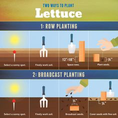 Planting Lettuce | Growing Your Own Salad Greens