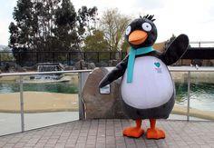 Penny Guin #mascot #costume #penguin #bird