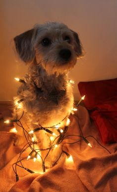 Reino posing with christmas lights