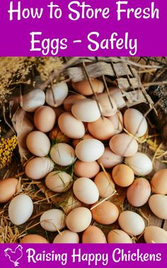 To wash or not to wash? How to tell if they're fresh? And how's it best to store them anyway? Here's all you need to know about storing fresh chicken eggs. Eggs Storing eggs - two burning questions and two great solutions. Best Chicken Coop, Backyard Chicken Coops, Building A Chicken Coop, Fresh Chicken, Chicken Eggs, Chicken Garden, Backyard Greenhouse, Raising Backyard Chickens, Keeping Chickens