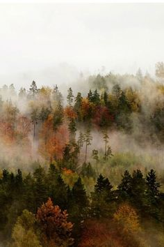 Waking up to a sky full of foggy mist in the Autumn always leaves us feeling like we're in a magical land. Everything just looks so much more mysterious and peaceful.