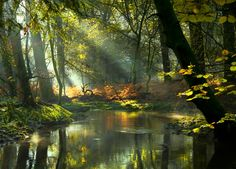 ***The Enchanted Forest (New Forest, England) by Moira Swift / 500px