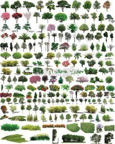 Garden tree meadow PSD