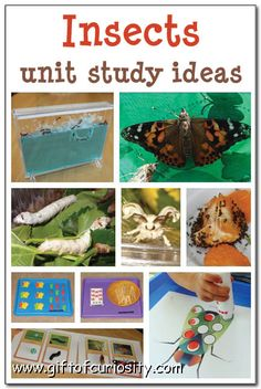 TONS of resources, activities, and printables for learning about insects or doing an general insect unit study with young kids or activities focused on ants, ladybugs, butterflies, and/or silkworms.     Gift of Curiosity #insects #ants #butterflies #ladybugs #silkworms #handsonscience #kbn