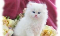 Image result for cute cats/kittens