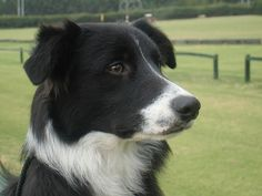 Border collie ~ he would play fetch for hours with us.