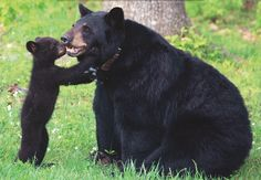 Stop Inviting Bears to Dinner - Chelsea Green