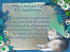 Nokee's Arthritis Tip #11- Supplements There are many supplements that are beneficial for arthritis sufferers such as glucosamine and chondroitin. They help to repair and reform the cartilage in the joints.  #caninearthritis #dogs #arthritis #pets #caninehealth #arthritisindogs #pethealth #supplements #glucosamine #chondroitin #cartilage