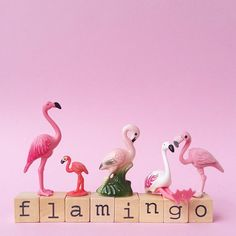 Flamingos. ❣Julianne McPeters❣ no pin limits