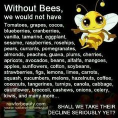 Save the bees Monsanto gmo Bee Facts, Save Our Earth, Bee Friendly, Bee Happy, Save The Bees, Busy Bee, Bees Knees, Bee Keeping, In This World