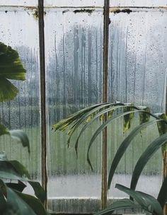Sound Of Rain, Images, Fox, Plants, Baby, Flora, Babies, Infant, Foxes