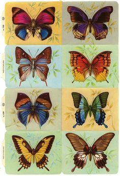 Vintage England Paper Lithographed Die Cut Scraps 8 Butterflies Out Of Print MLP Quilling Butterfly, Butterfly Sketch, Butterfly Painting, Butterfly Wallpaper, Butterfly Design, Butterfly Wings, Butterfly Colors, Butterfly Mandala, Butterfly Pictures